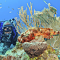 Diver Looks At Scorpionfish by Karen Doody