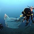 Diver Removes Invasive Indo-pacific by Karen Doody