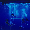 Divers Decompressing Beneath A Boat by Alexis Rosenfeld