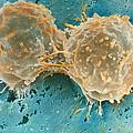 Dividing Cells by Professor P. Motta & D. Palermo