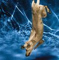 Diving Dog 2 by Jill Reger