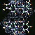 Dna Molecule by John Bavosi