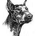 Doberman-pincher-portrait by Gordon Punt
