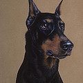 Doberman Pinscher by Patricia Ivy