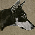Doberman by Susan Herber