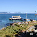 Dock At Point Reyes Calfornia . 7d16069 by Wingsdomain Art and Photography