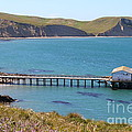 Dock At Point Reyes Calfornia . 7d16133 by Wingsdomain Art and Photography