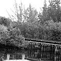 Dock On The River In Black And White by Rob Hans