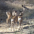 Doe And Twins by Vi Brown