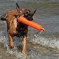 Dog 119 by Joyce StJames