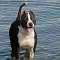 Dog 124 by Joyce StJames