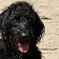 Dog 73 by Joyce StJames