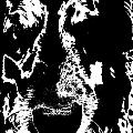 Dog Abstract Black And White by Renate Nadi Wesley