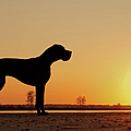 Dog Against Setting Sun by Lily Aeneae Venema photography