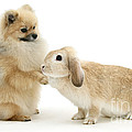 Dog And Rabbit by Mark Taylor