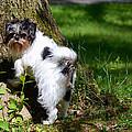 Dog And Tree by Jeffrey Platt