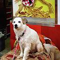 Dog At Carnival by Susan Savad
