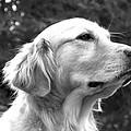 Dog Black And White Portrait by Sumit Mehndiratta