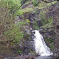 Dog Creek Falls by Charles Robinson
