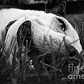 Dog Days Of Summer by Susan Herber
