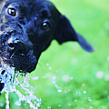 Dog Drinking From A Water Hose by Crissy Kight / www.dearcrissy.com