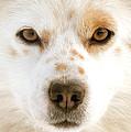 Dog Eyes by Vaidas Bucys