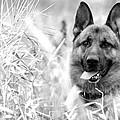 Dog In Field by Sumit Mehndiratta
