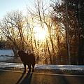Dog In Morning Sun by Kent Lorentzen