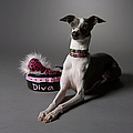 Dog In Sitting Position With Diva Bowl by Chris Amaral