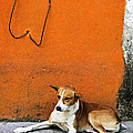 Dog Near Colorful Wall In Mexican Village by Elena Elisseeva