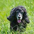 Dog On The Grass by Mats Silvan