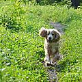 Dog Running In The Green Field by Mats Silvan