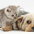 Dog Surrendering To Kitten by Mark Taylor