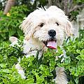 dog by Tom Gowanlock