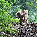 Dog Walking by Mats Silvan