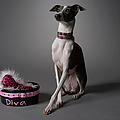 Dog With Diva Bowl by Chris Amaral