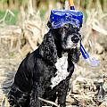 Dog With Diving Mask by Mats Silvan