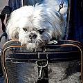 Doggie To Go by Burney Lieberman