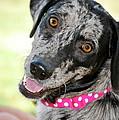Doggone Cute by Debbie Karnes