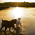 Dogs At Sunset by Stephanie McDowell