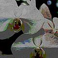Dogwood Blossoms by Bob Whitt