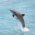 Dolphin Jump by Dave Fleetham - Printscapes