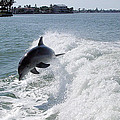 Dolphin Playing by Mickey Krause