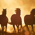 Domestic Horse Equus Caballus Trio by Konrad Wothe