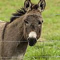 Donkey - The Beast Of Burden by Kathy Clark
