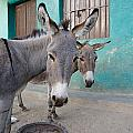 Donkeys, Harar, Ethiopia, Africa by David DuChemin