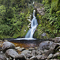 Dorothy Falls Near Lake Kaniere by Colin Monteath