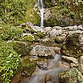 Dorothy Falls Near Lake Kaniere New by Colin Monteath