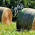 Double Hay Rolls by Maria Urso