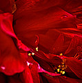 Double Red by DigiArt Diaries by Vicky B Fuller
